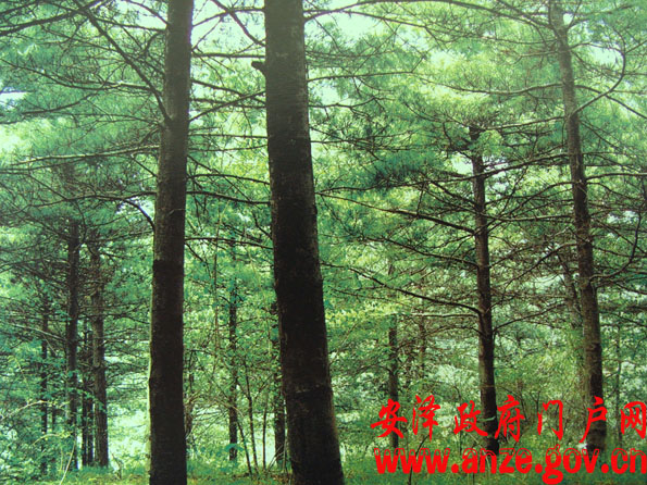 森林家族星空眺望塔